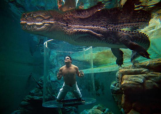 12_crocosaurus_cove